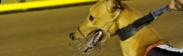 Dog at track